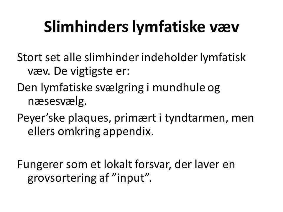 Slimhinders lymfatiske væv