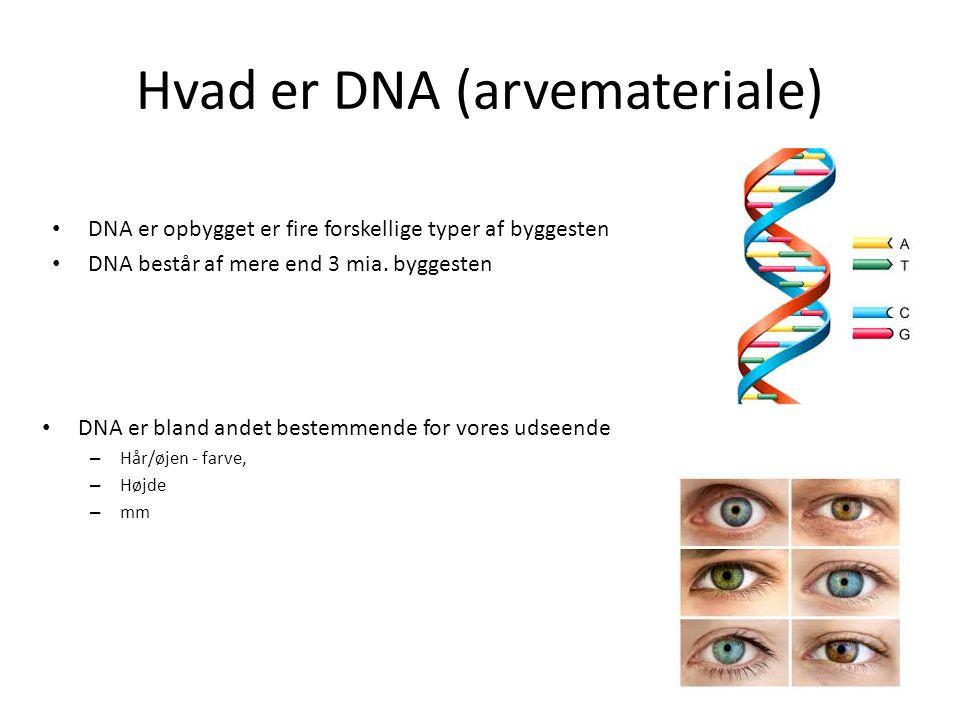 Hvad er DNA (arvemateriale)