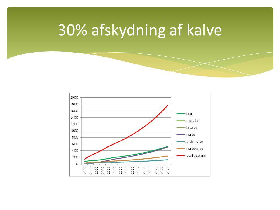 30% afskydning af kalve