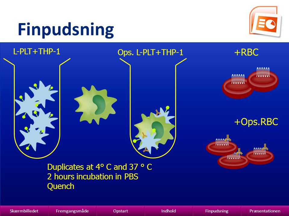Finpudsning +RBC +Ops.RBC L-PLT+THP-1 Ops. L-PLT+THP-1