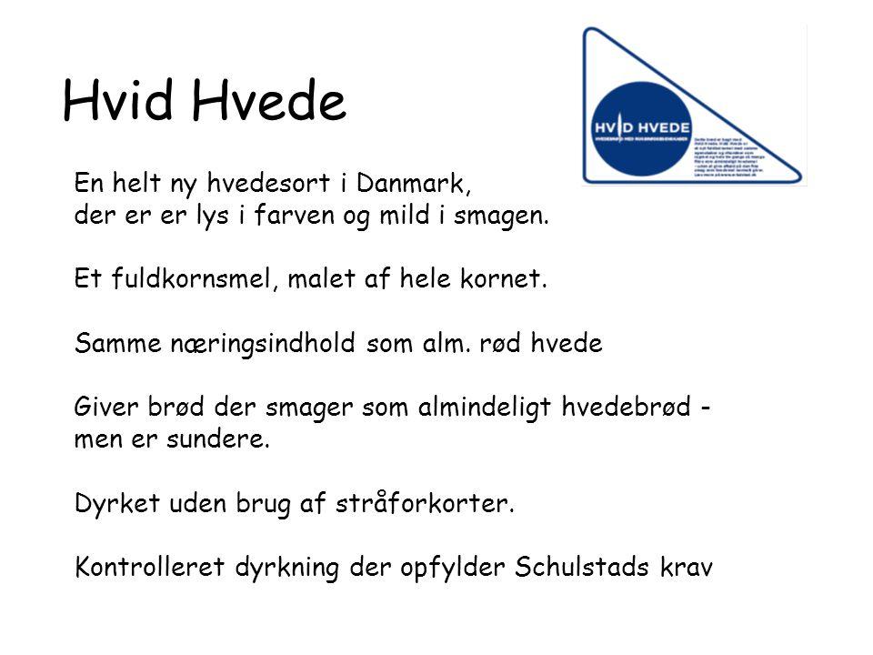 Hvid Hvede En helt ny hvedesort i Danmark,