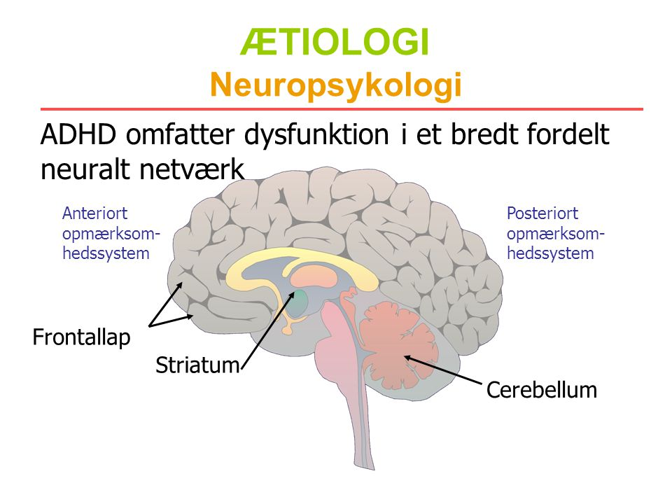 ÆTIOLOGI Neuropsykologi