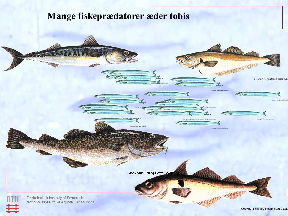 Mange fiskeprædatorer æder tobis