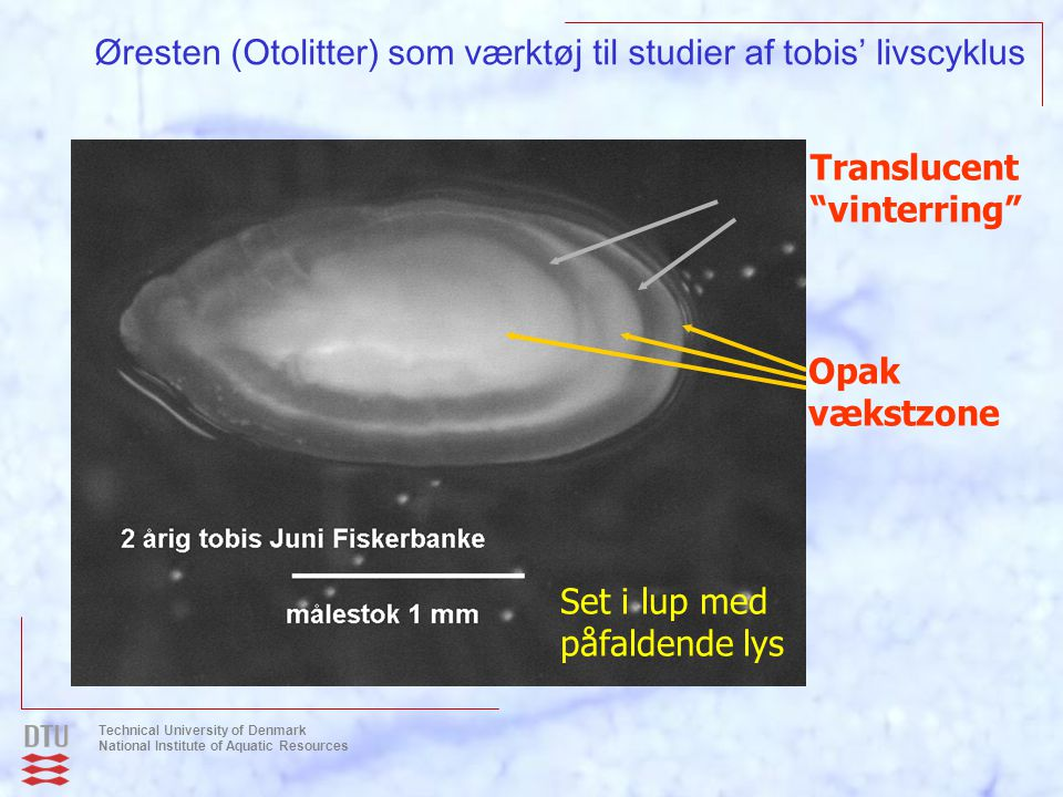 Øresten (Otolitter) som værktøj til studier af tobis' livscyklus