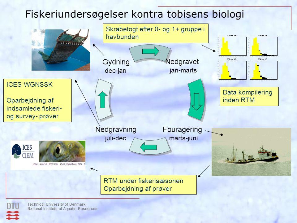 Fiskeriundersøgelser kontra tobisens biologi