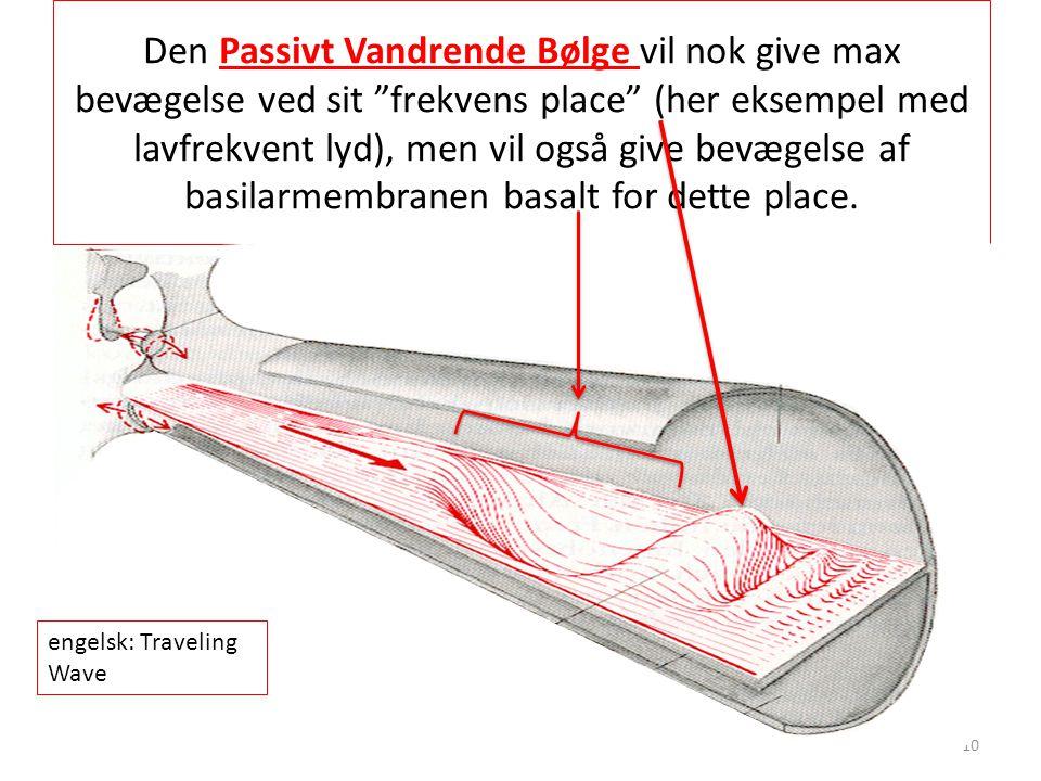 Den Passivt Vandrende Bølge vil nok give max bevægelse ved sit frekvens place (her eksempel med lavfrekvent lyd), men vil også give bevægelse af basilarmembranen basalt for dette place.