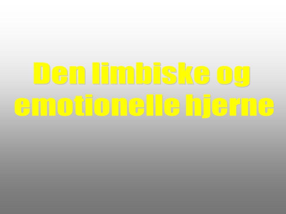 Den limbiske og emotionelle hjerne