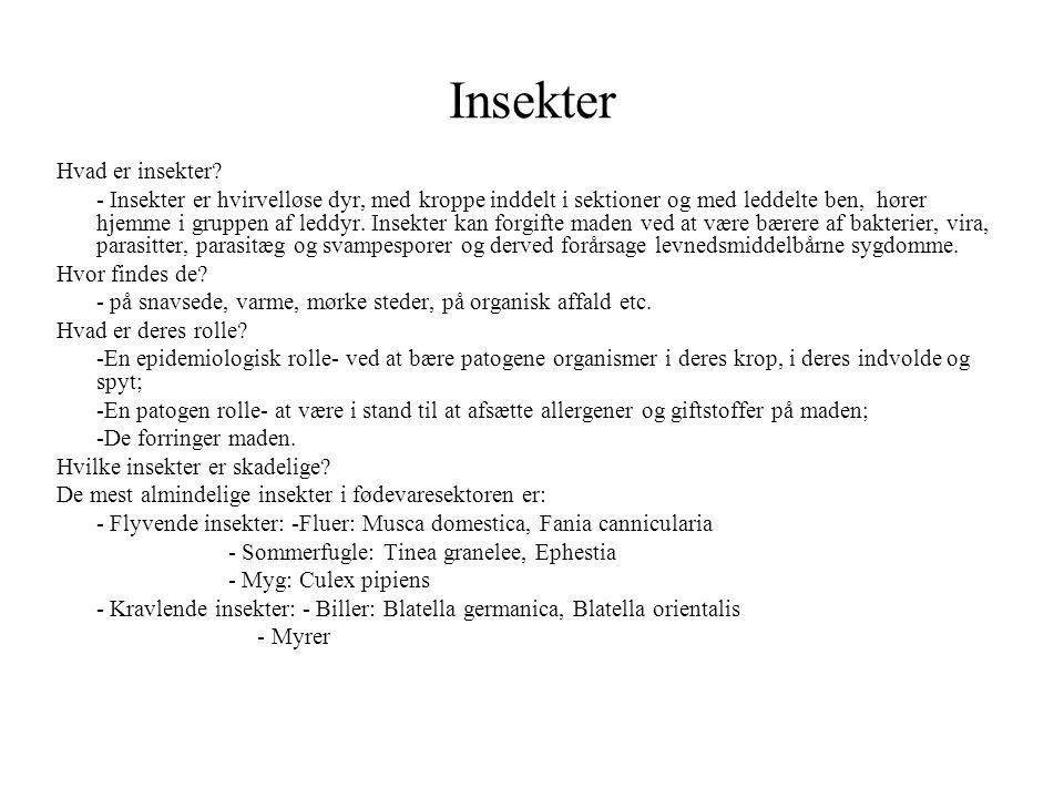 Insekter Hvad er insekter