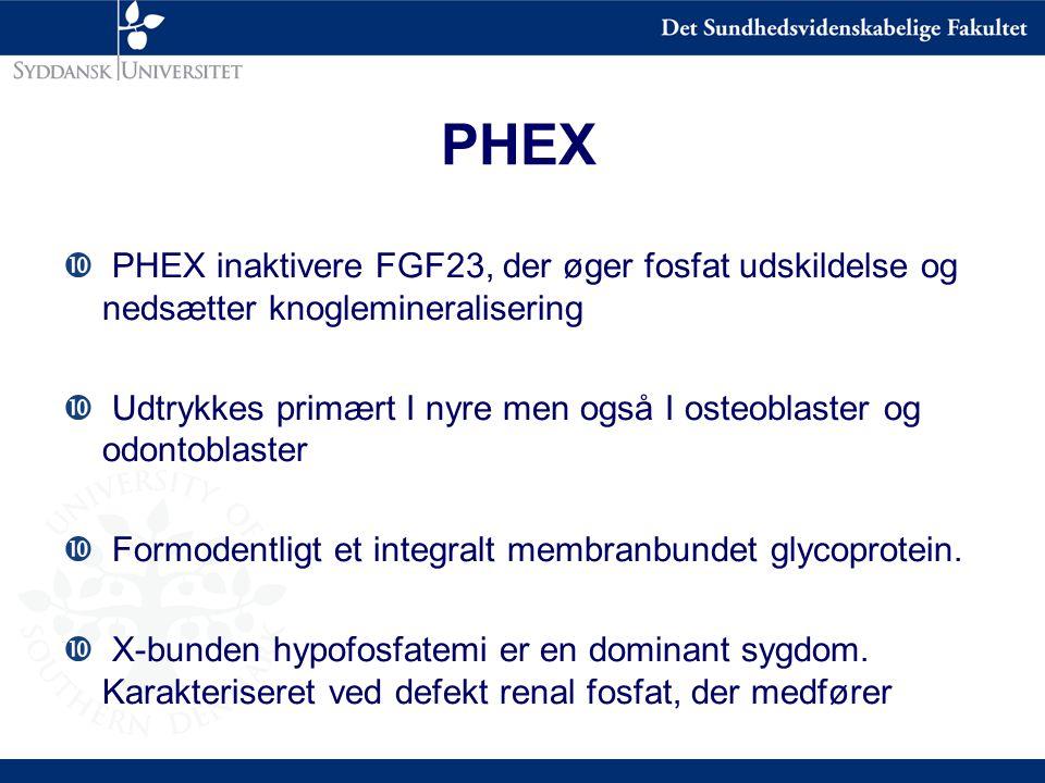 PHEX PHEX inaktivere FGF23, der øger fosfat udskildelse og nedsætter knoglemineralisering.