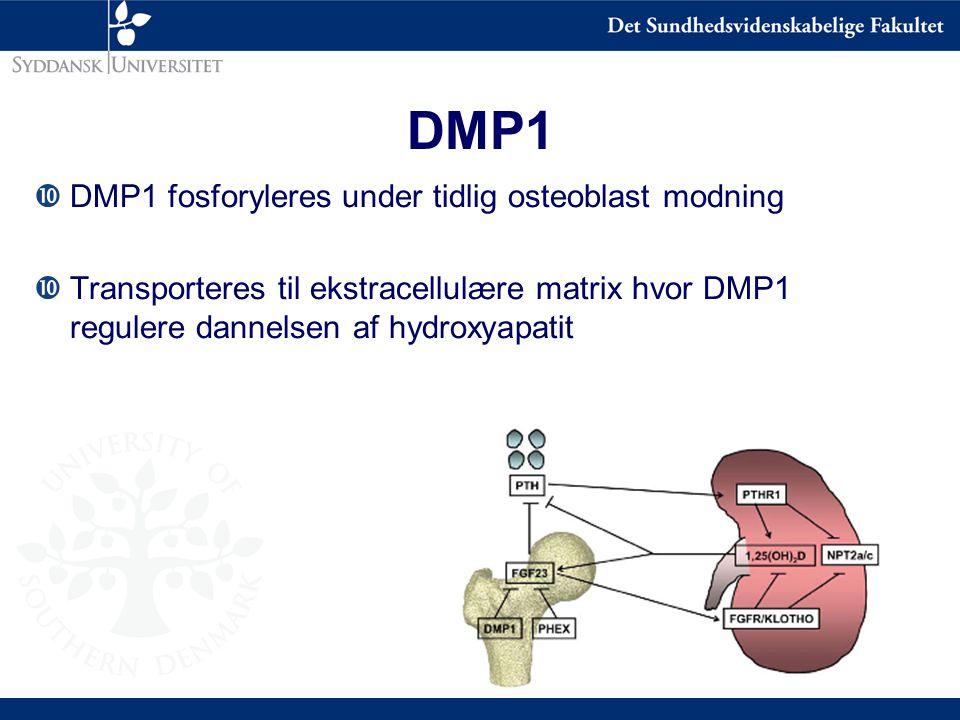 DMP1 DMP1 fosforyleres under tidlig osteoblast modning