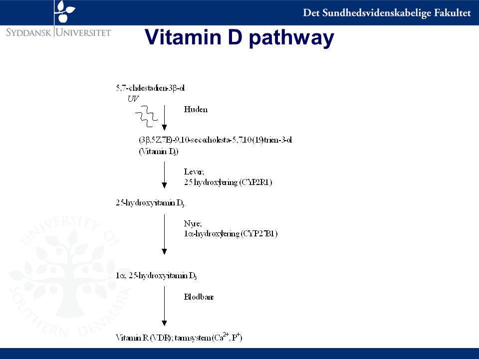 Vitamin D pathway
