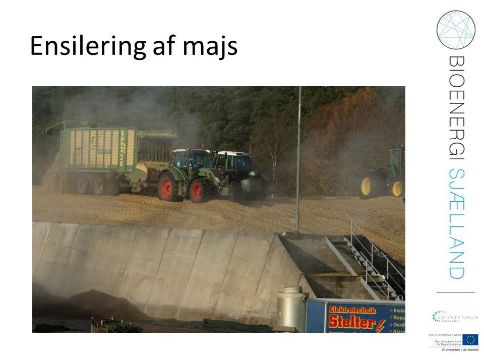Ensilering af majs