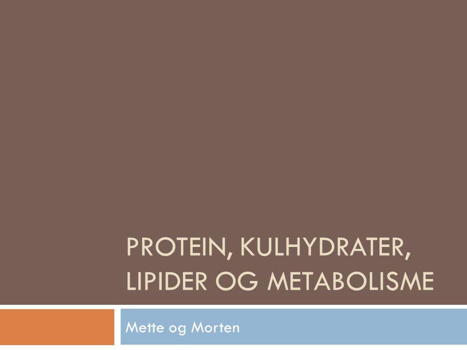 Protein, kulhydrater, lipider og metabolisme