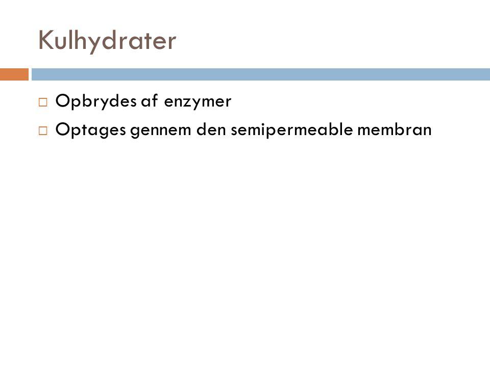 Kulhydrater Opbrydes af enzymer
