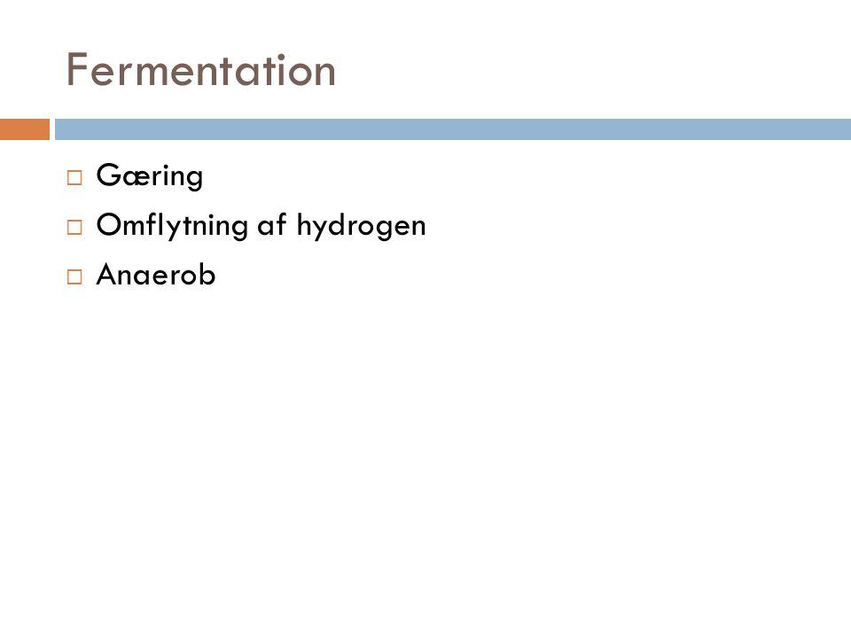 Fermentation Gæring Omflytning af hydrogen Anaerob
