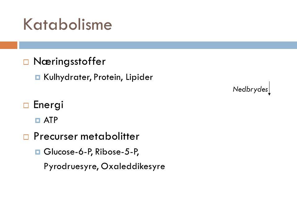 Katabolisme Næringsstoffer Energi Precurser metabolitter