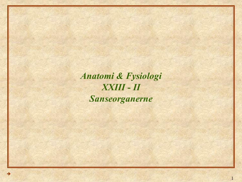 Anatomi & Fysiologi XXIII - II Sanseorganerne