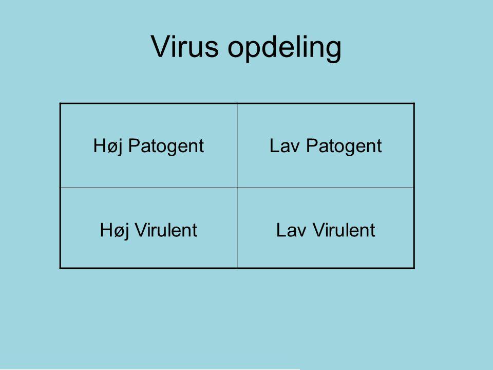 Virus opdeling Høj Patogent Lav Patogent Høj Virulent Lav Virulent