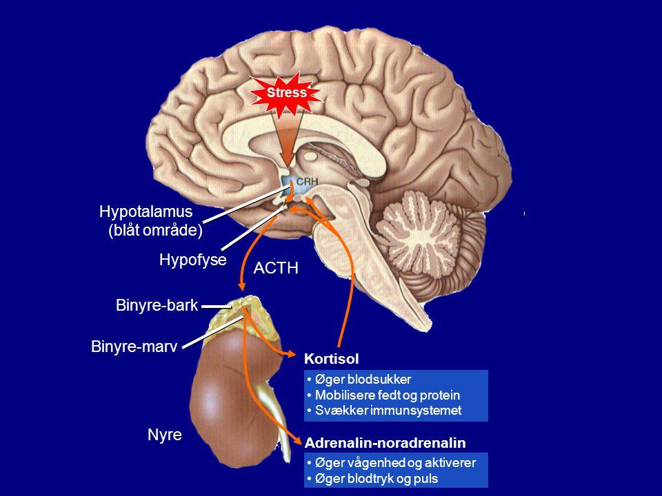 ACTH Hypotalamus (blåt område) Hypofyse Binyre-bark Binyre-marv Nyre