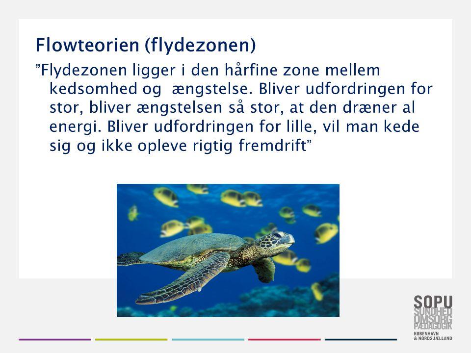 Flowteorien (flydezonen)