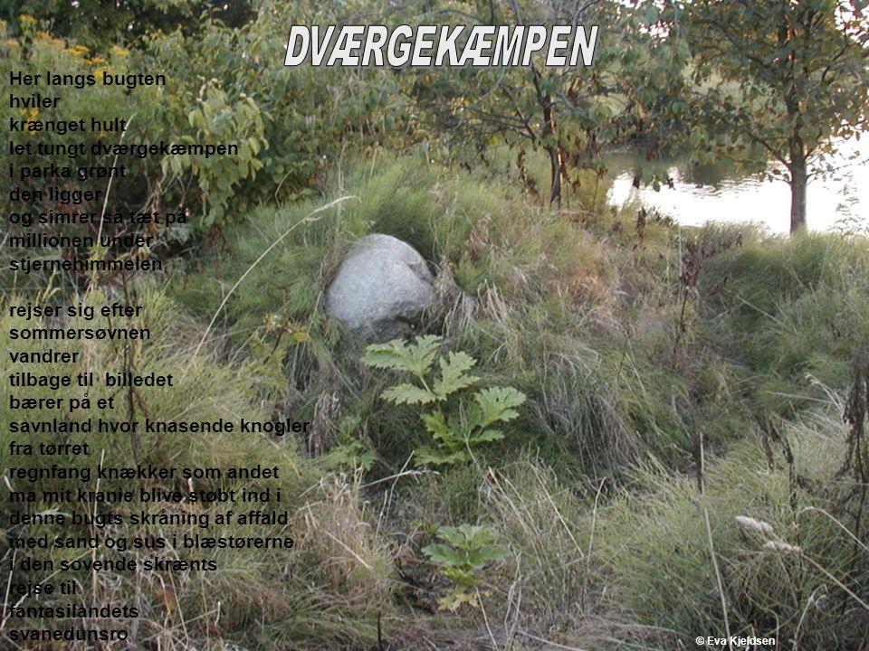 let tungt dværgekæmpen i parka grønt den ligger og simrer så tæt på