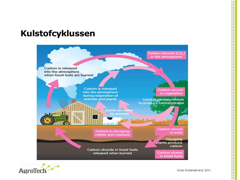 Kulstofcyklussen