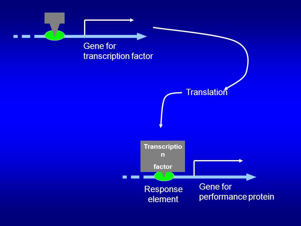 Gene for transcription factor Translation Gene for Response