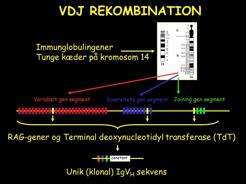 VDJ REKOMBINATION Immunglobulingener Tunge kæder på kromosom 14