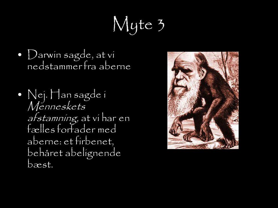 Myte 3 Darwin sagde, at vi nedstammer fra aberne