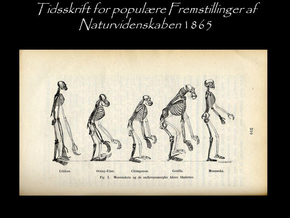 Tidsskrift for populære Fremstillinger af Naturvidenskaben 1865