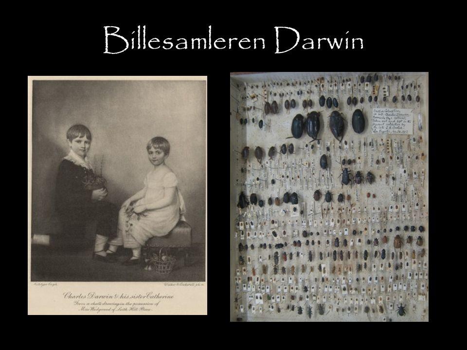 Billesamleren Darwin