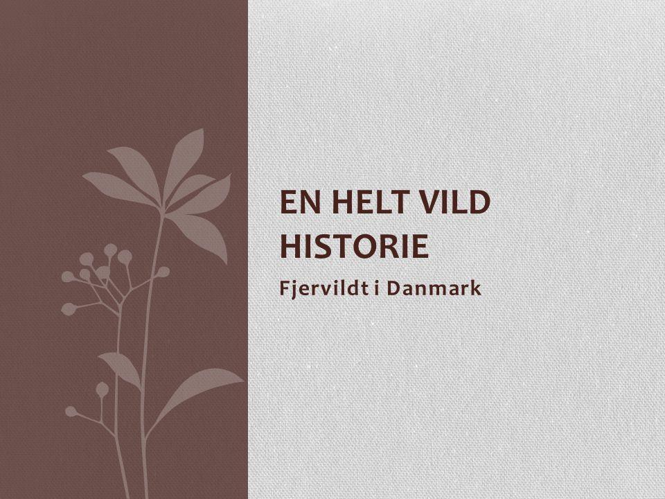 En helt vild historie Fjervildt i Danmark