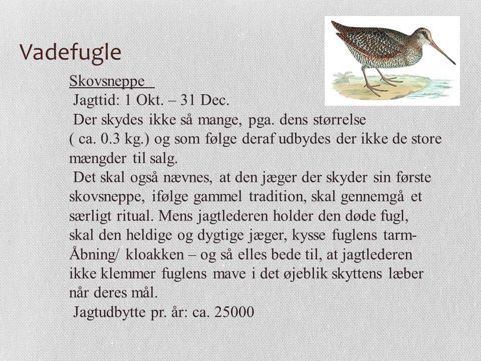 Vadefugle Skovsneppe Jagttid: 1 Okt. – 31 Dec.
