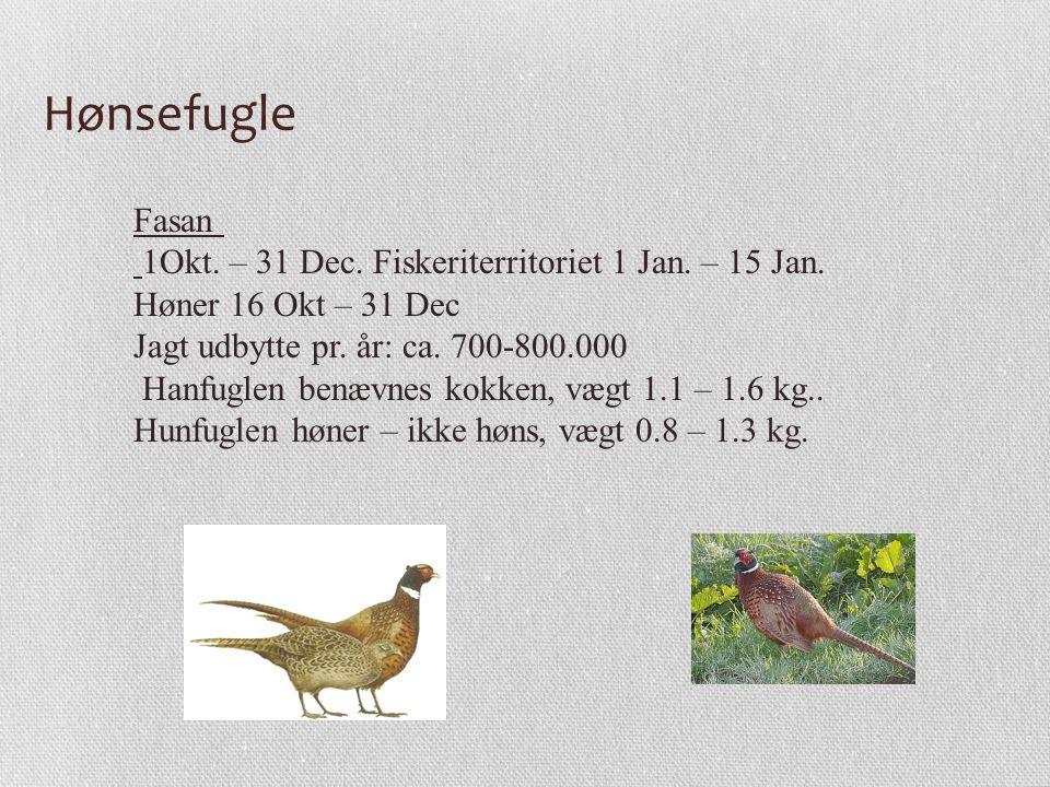 Hønsefugle Fasan 1Okt. – 31 Dec. Fiskeriterritoriet 1 Jan. – 15 Jan.