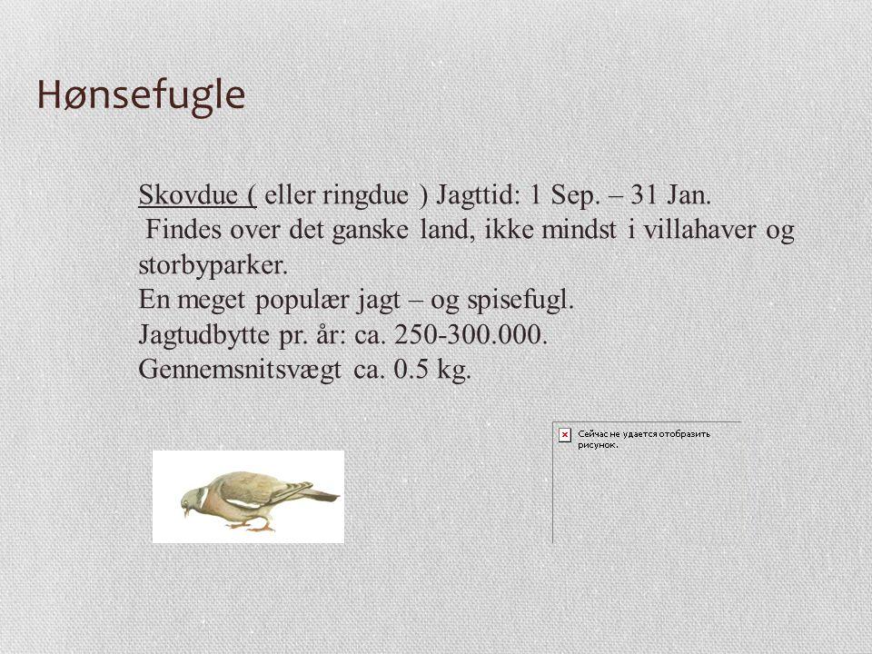 Hønsefugle Skovdue ( eller ringdue ) Jagttid: 1 Sep. – 31 Jan.