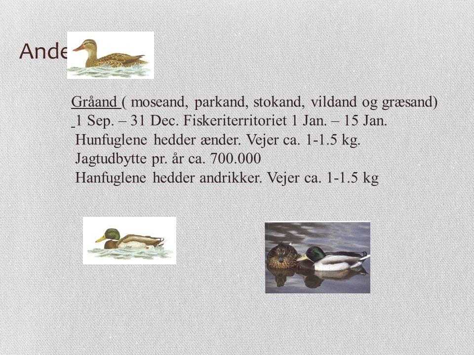 Andefugle Gråand ( moseand, parkand, stokand, vildand og græsand)