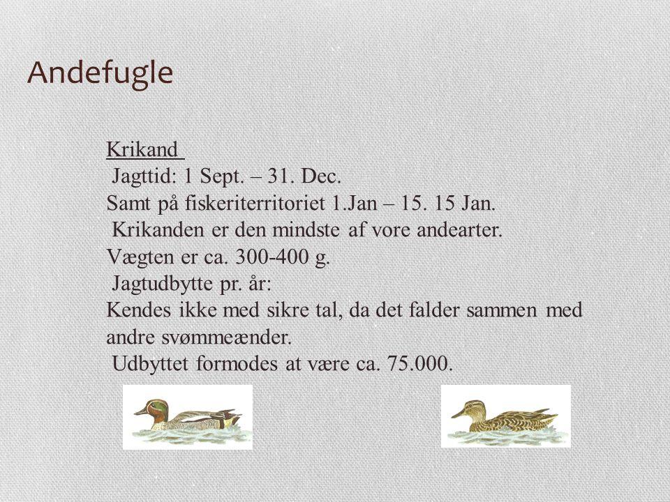 Andefugle Krikand Jagttid: 1 Sept. – 31. Dec.