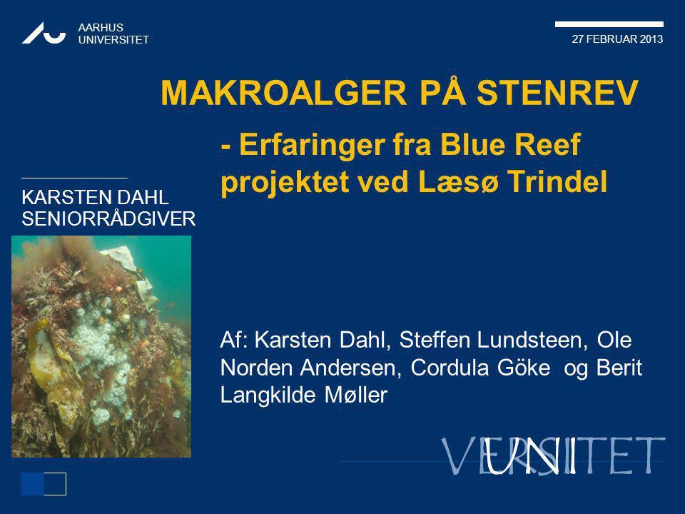 Makroalger på stenrev - Erfaringer fra Blue Reef projektet ved Læsø Trindel.