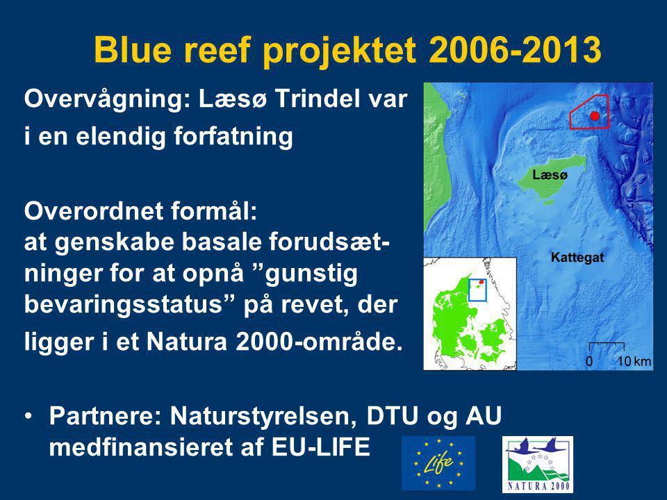 Blue reef projektet 2006-2013 Overvågning: Læsø Trindel var