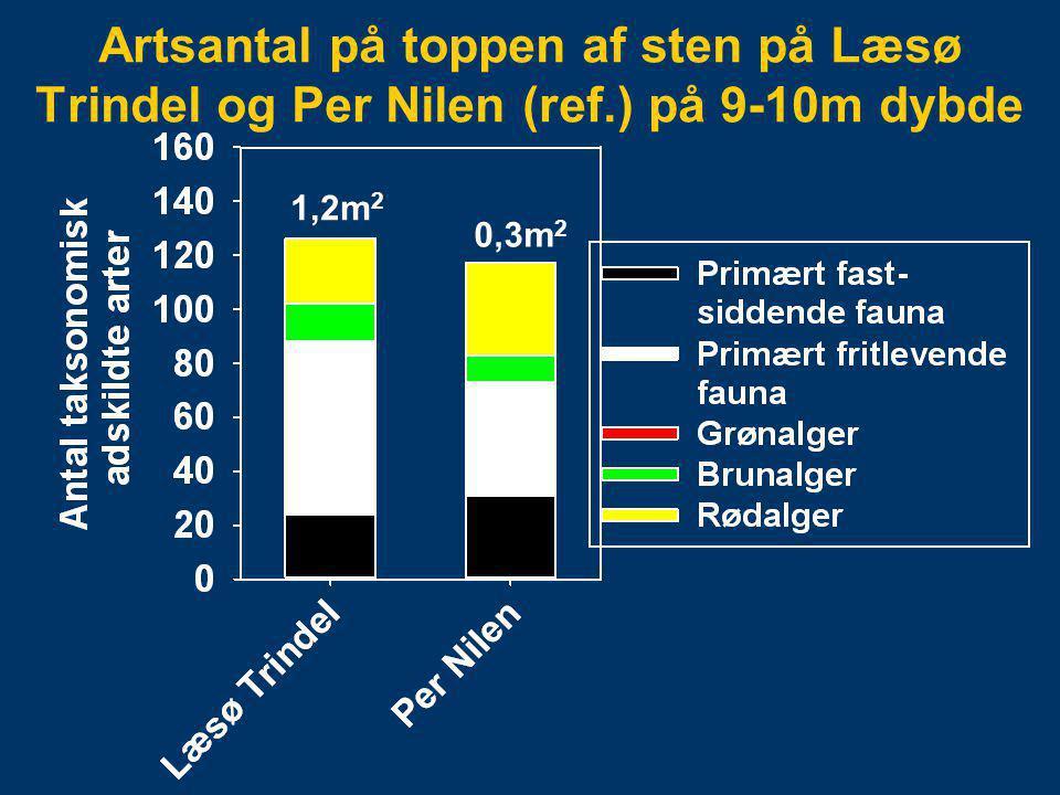 Artsantal på toppen af sten på Læsø Trindel og Per Nilen (ref