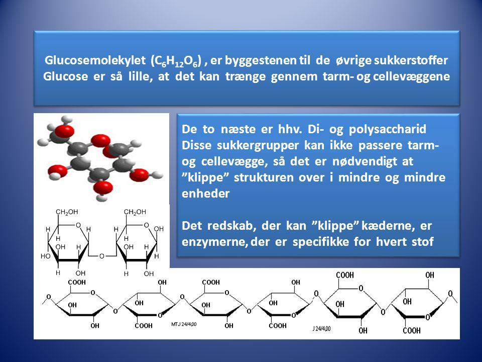 Glucose er så lille, at det kan trænge gennem tarm- og cellevæggene