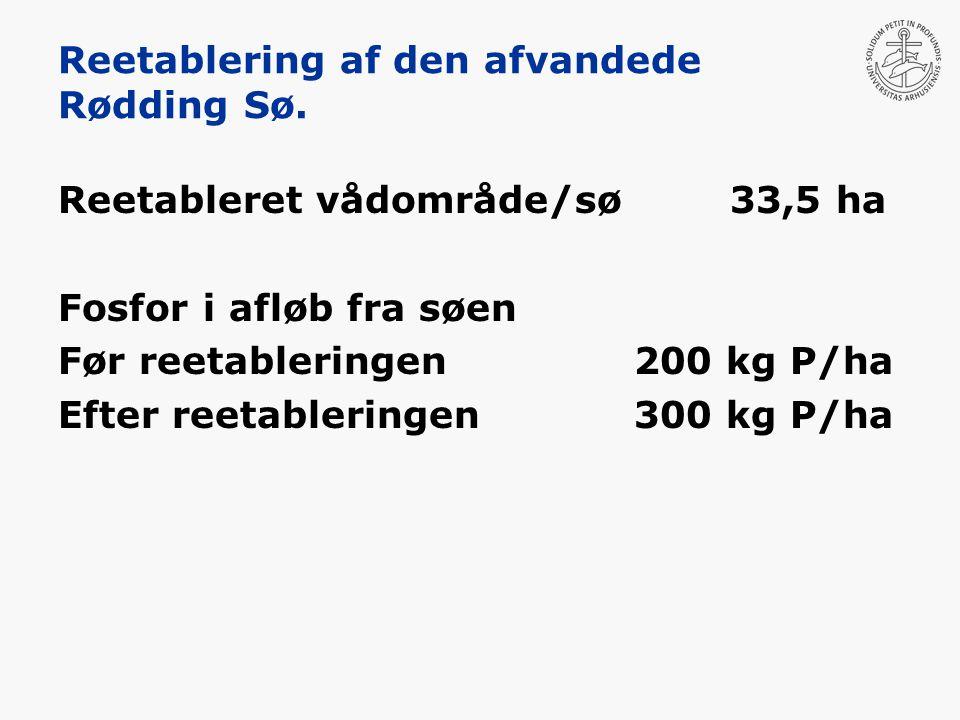 Reetablering af den afvandede Rødding Sø.