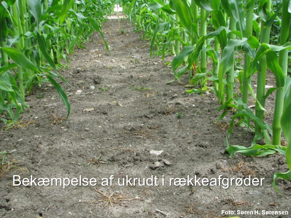 Bekæmpelse af ukrudt i rækkeafgrøder