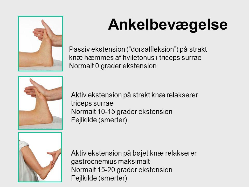 Ankelbevægelse Passiv ekstension ( dorsalfleksion ) på strakt knæ hæmmes af hviletonus i triceps surrae.