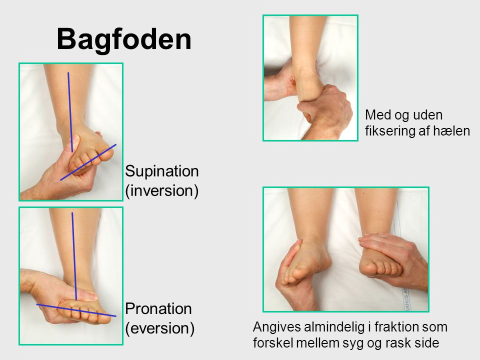 Bagfoden Supination (inversion) Pronation (eversion)