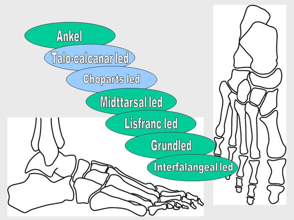 Ankel Talo-calcanar led Choparts led Midttarsal led Lisfranc led Grundled Interfalangeal led