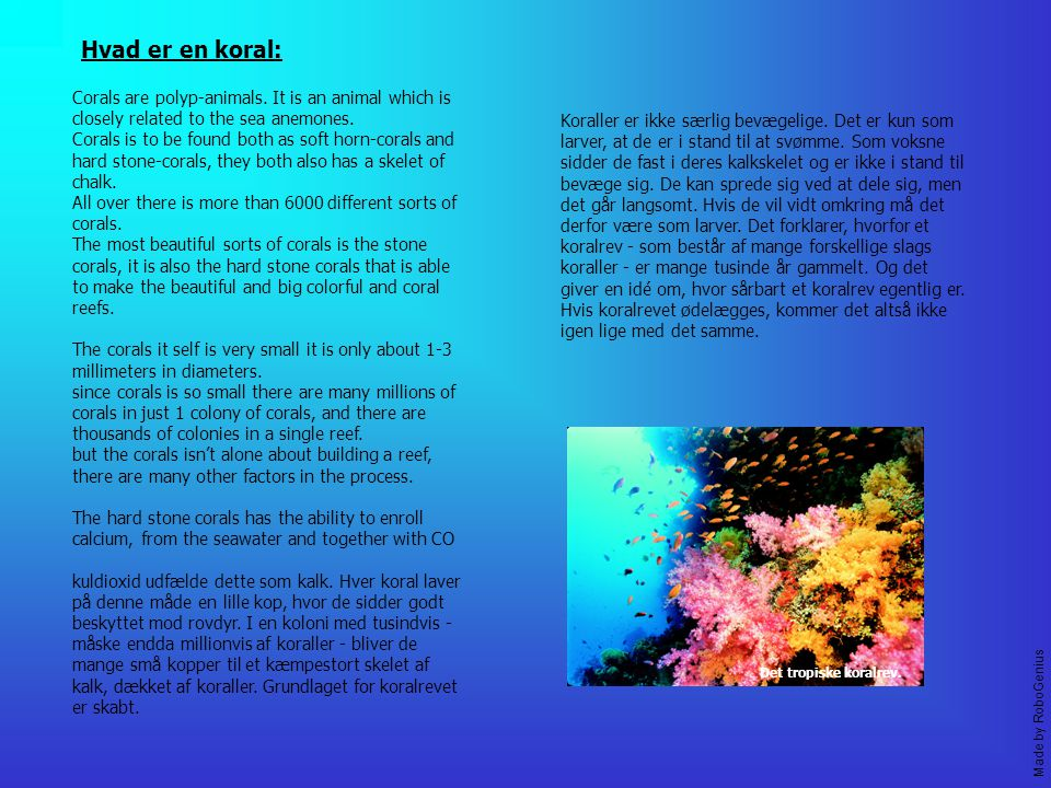 Hvad er en koral: Corals are polyp-animals. It is an animal which is closely related to the sea anemones.