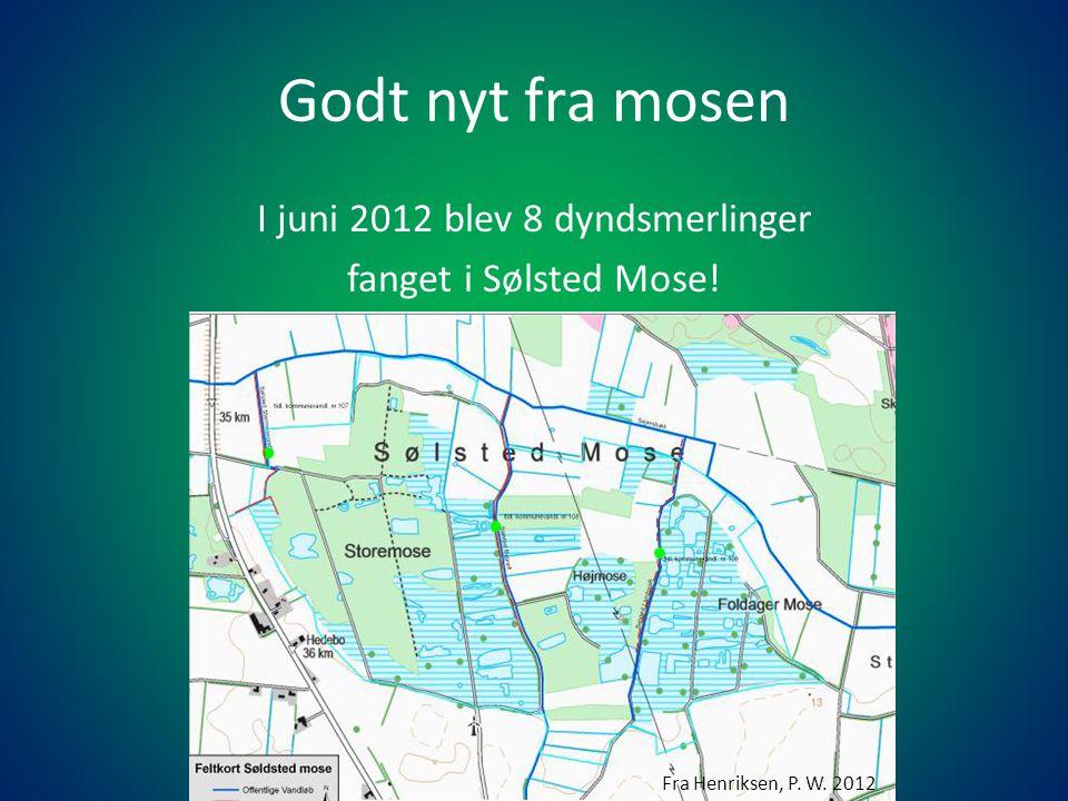 I juni 2012 blev 8 dyndsmerlinger fanget i Sølsted Mose!