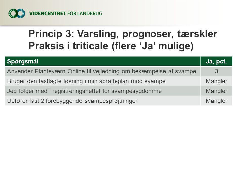Princip 3: Varsling, prognoser, tærskler Praksis i triticale (flere 'Ja' mulige)