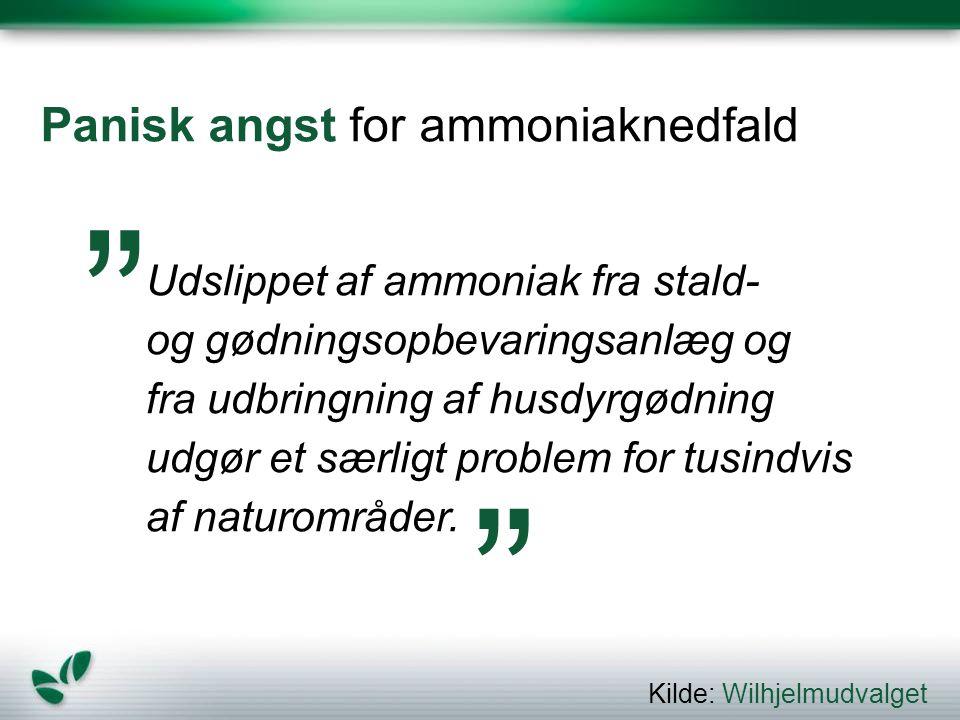 Panisk angst for ammoniaknedfald
